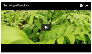フェーンブロックのアレルギーと効果の写真