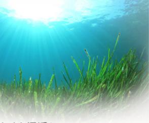 エクラバリアの海藻エキスの写真