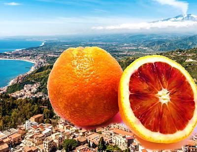 リブランコートのレッドオレンジの画像